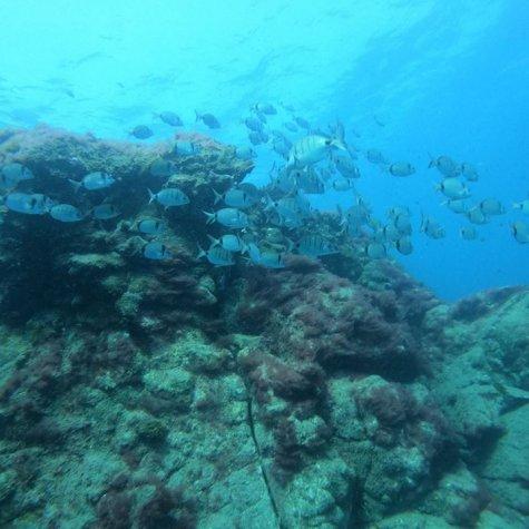 Découvrez la plongée sous-marine