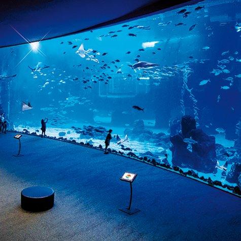Las Palmas + Botanical Garden + Volcano + Poem of the sea Aquarium