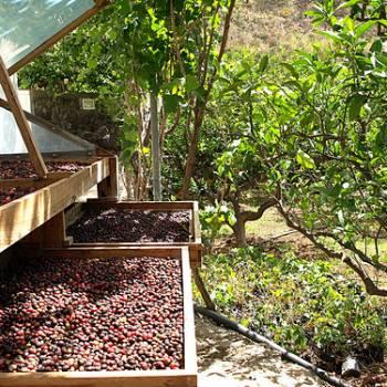 Tour de´île + Plantation de café